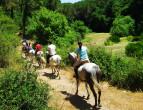 javanje konji aktiven zivot